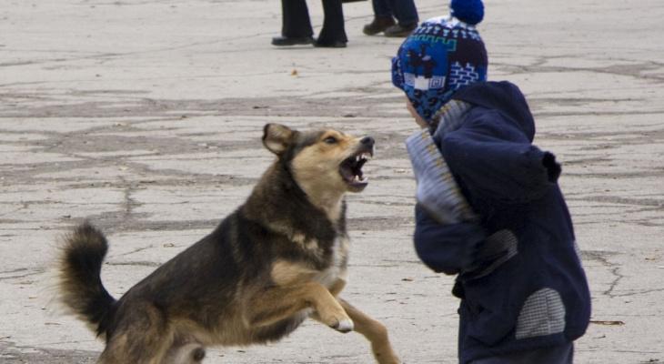 Властные структуры Ухты решили принять более жёсткие требования к отлову бродячих псов