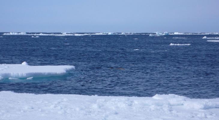 Потепление в Арктике оказалось быстрее глобального в четыре раза