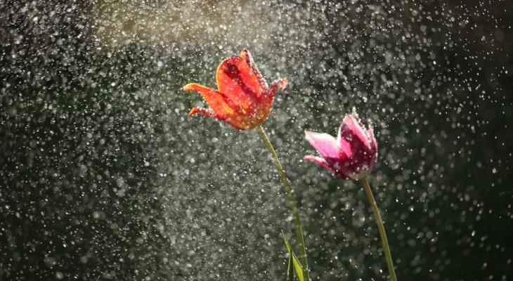 Заморозки и ни намека на лето: какая погода будет в Ухте на рабочей неделе