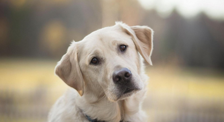Ухтинец, выкинувший собаку с 5-го этажа, получил штраф