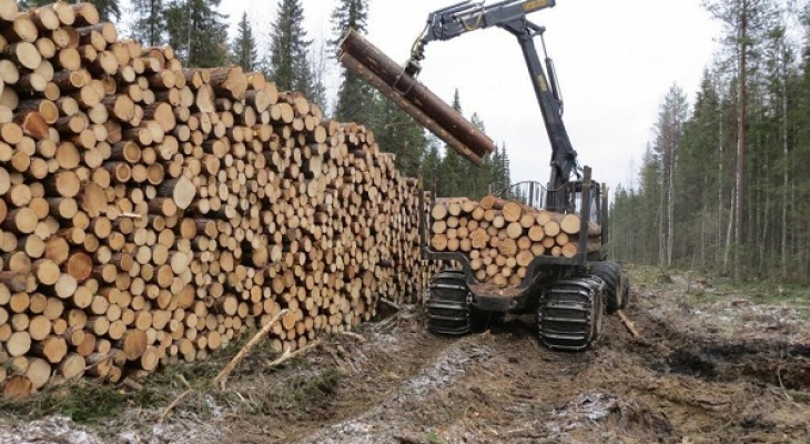 Из Коми 63% экспортного леса уходит в Китай