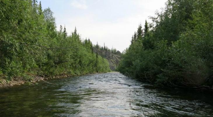 Появились подробности смерти от ветки туриста на реке в Коми