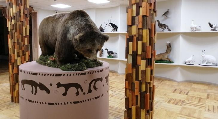 Дети из Ухты изучат основы экологии через легенды о медведе