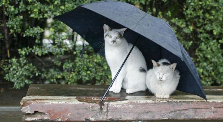 Погода в Ухте в выходные испортит многим планы