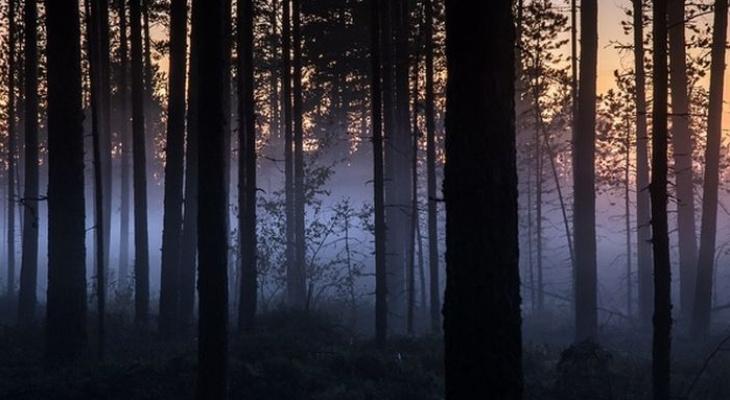 В Коми уже третий день ищут 57-летнюю женщину, потерявшуюся в лесу