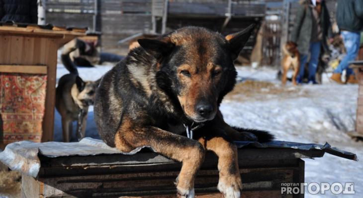 В Коми к бездомным животным будут относиться ответственнее