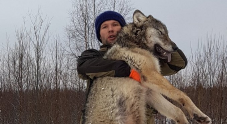 Охотники в Коми добыли волка