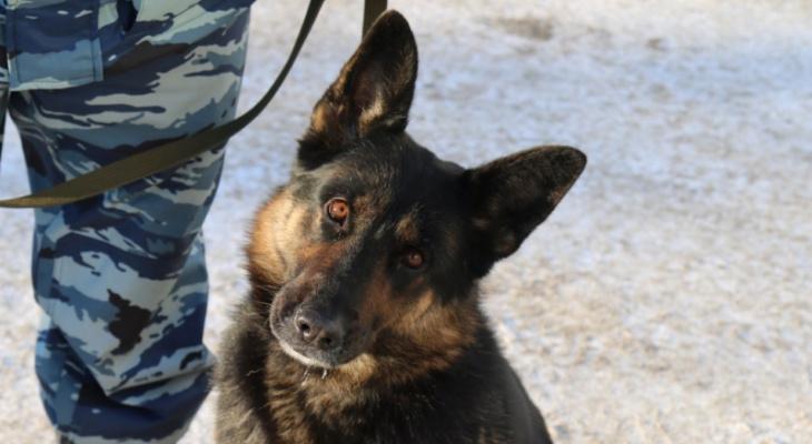 В Коми полицейский пес нашел похитителя брусники и яблок