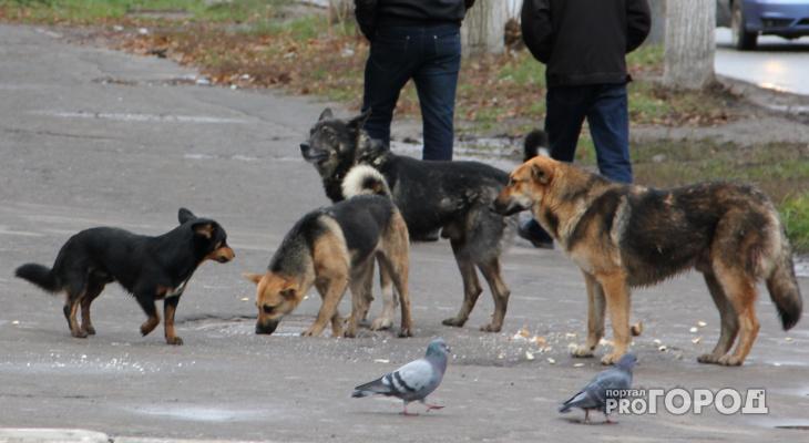 В Ухте участились случаи отравления собак