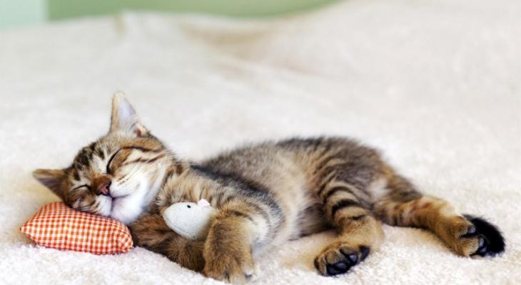 Ученые установили оптимальное время сна для каждого возраста
