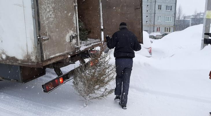 Новогодние елки ухтинцев отправляют в приют
