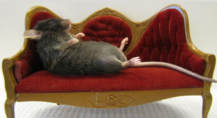 """Ухтинка: """"Крысы в нашем подъезде чувствуют себя как дома!"""""""