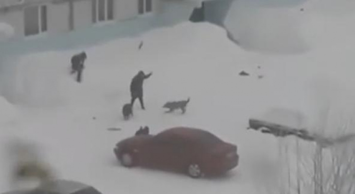 В Коми стая собак загнала школьника в сугроб
