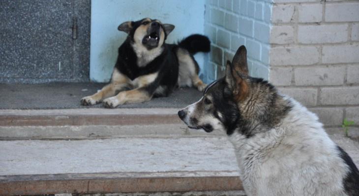Ярегу вновь атаковали бродячие собаки