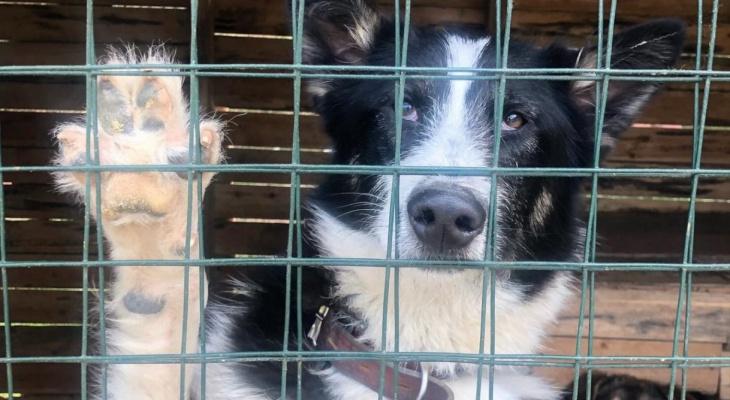 Из кирпичей Дома пионеров построят вольеры для бездомных ухтинских собак
