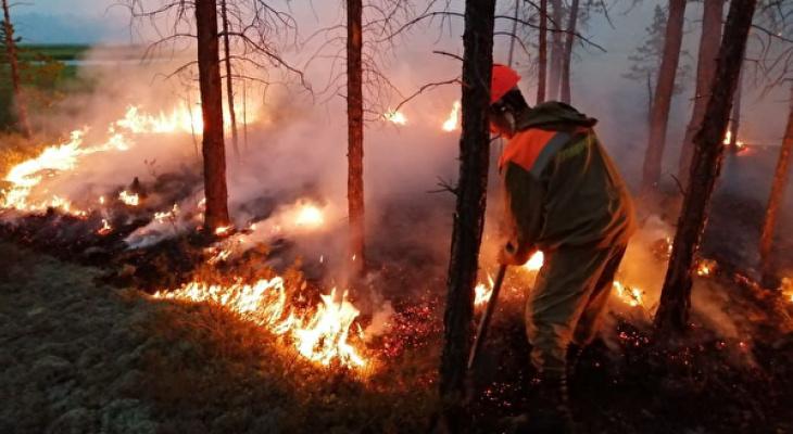 В Коми за сутки произошло пять лесных пожаров