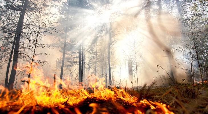 Под Ухтой загорелся лес