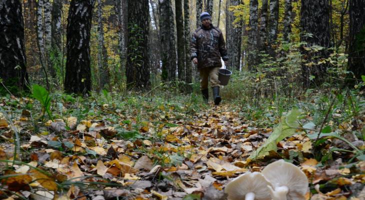 В Коми две женщины и двухлетний ребенок заблудились в лесу