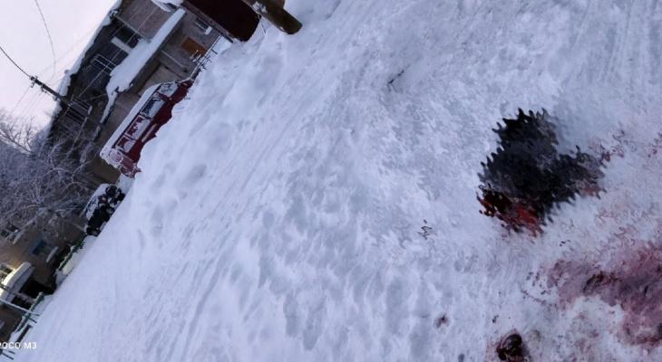 Под Сосногорском волки загрызли собаку
