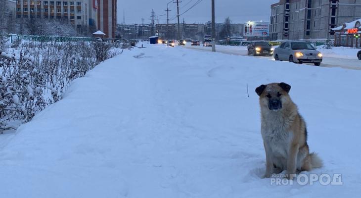 В Госсовете Коми хотят изменить подход к отлову бродячих собак