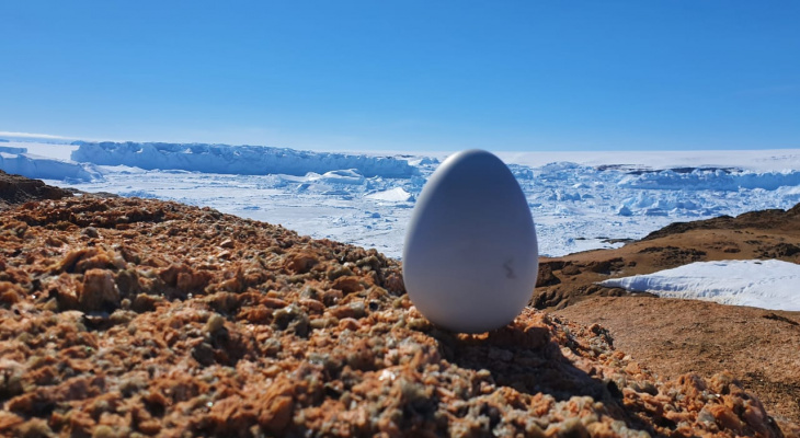 Арктические технологии помогли обеспечить интернетом вещей Антарктику