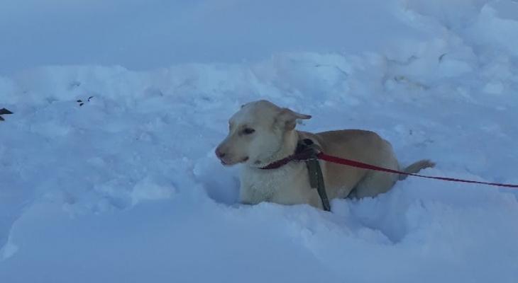 Собачка, которой отстрелили часть морды, смогла найти семью!