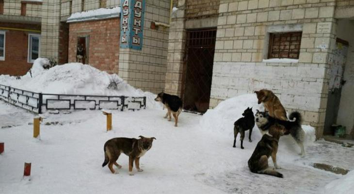 """""""Накинулась и порвала штанину"""". После многочисленных обращений горожан на отлов собак выделят два миллиона рублей"""