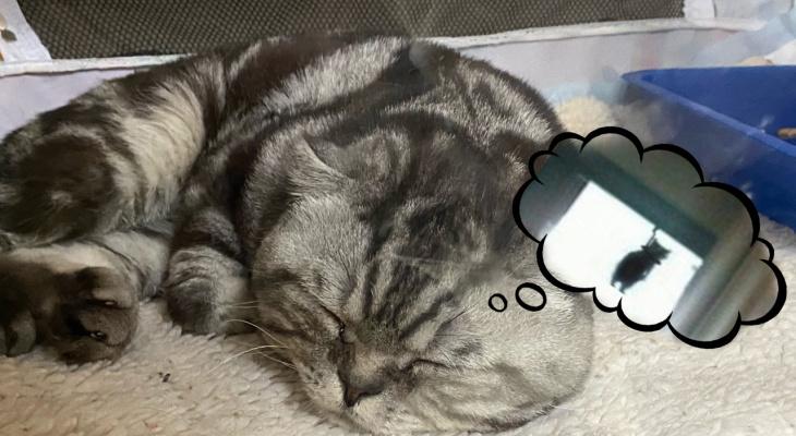 Фоторепортаж: выставка котов в Ухте оказалась не такой уж милой