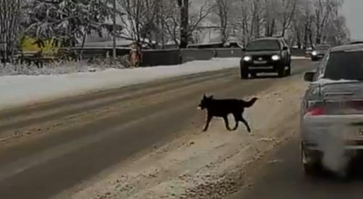 Водитель наехавший на собаку получит 180 тысяч рублей, за поврежденный автомобиль
